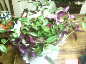My Wandering Jew is beginning to expand!!!